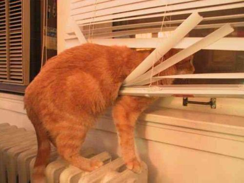 cats and blinds 1