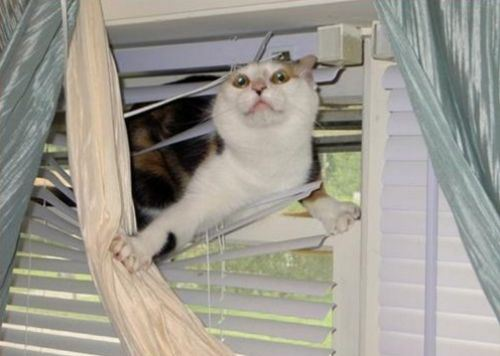 cats and blinds 10