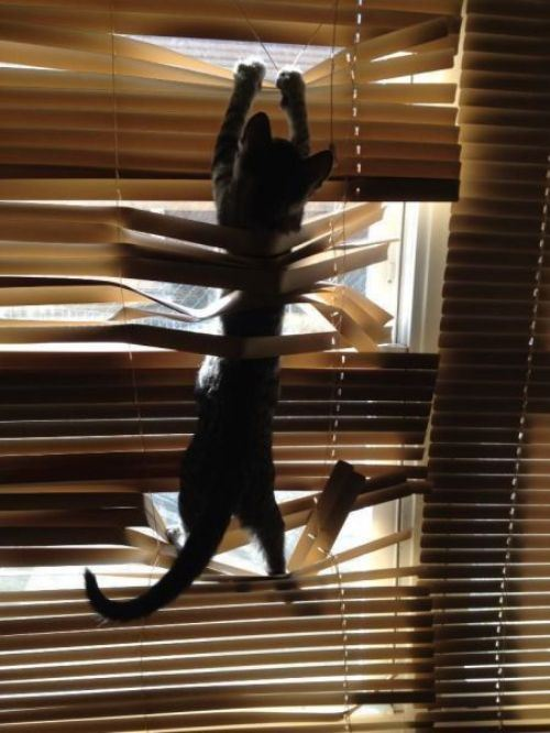 cats and blinds 11