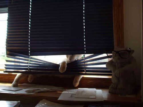 cats and blinds 2