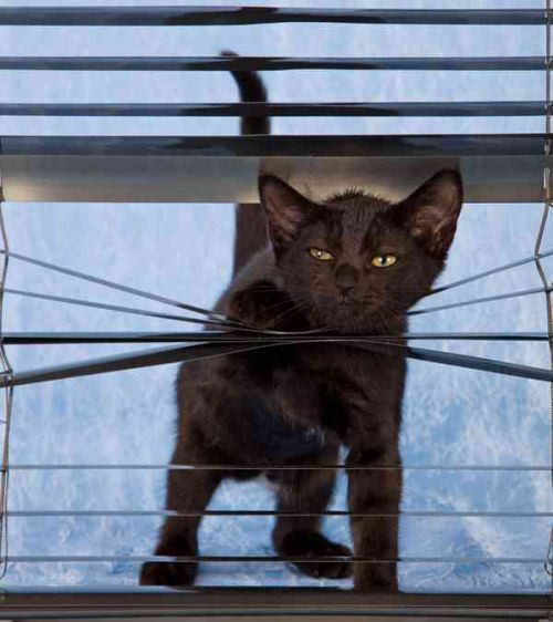 cats and blinds 3