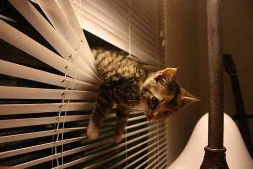 cats and blinds 4