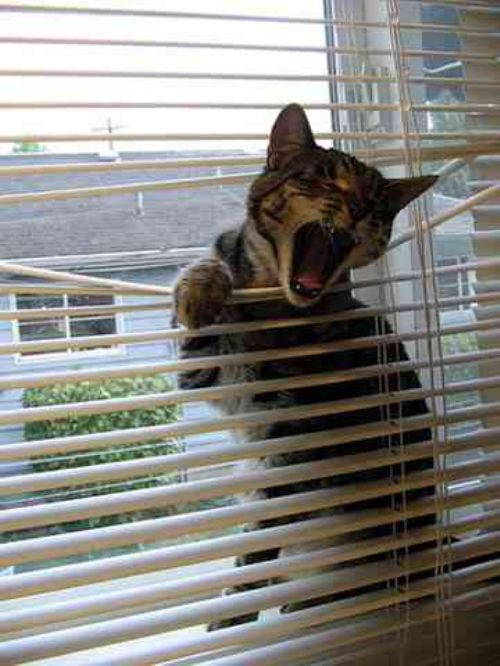 cats and blinds 5
