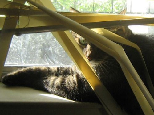 cats and blinds 6