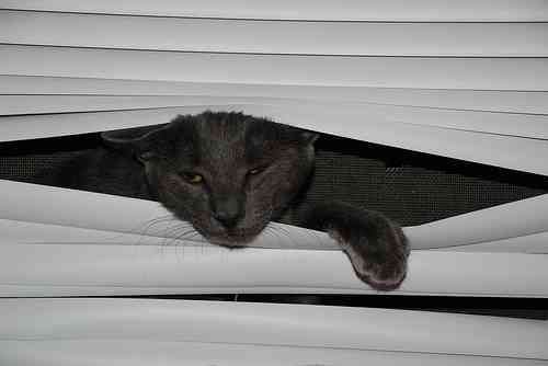 cats and blinds 7