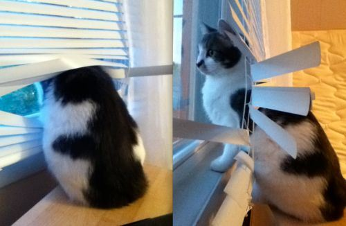 cats and blinds 9