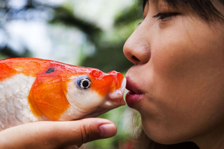 A woman kisses a koi before it is placed in the water of a pond of Kasteeltuinen