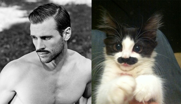 Sexy-Men-and-Adorable-Cats-12