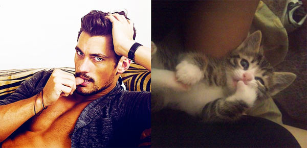 Sexy-Men-and-Adorable-Cats-7