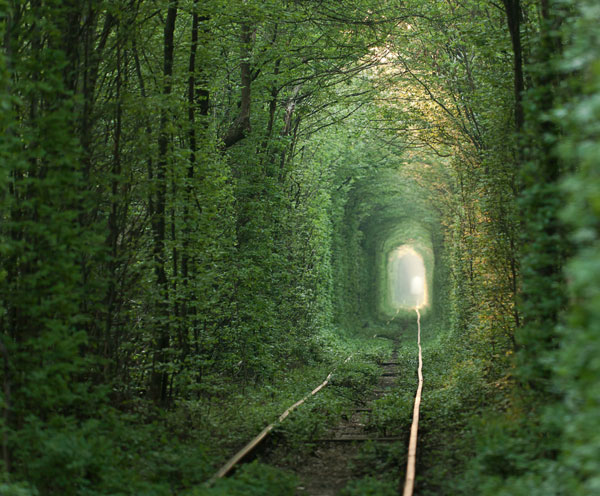 Tunnel-of-Love-in-Klevan,-Ukraine-1