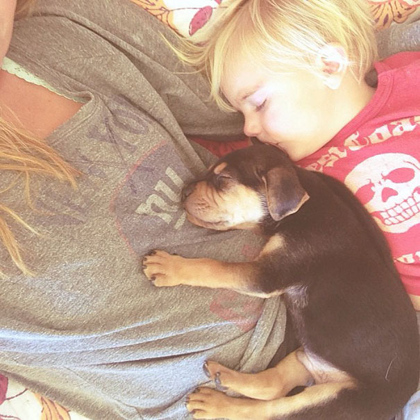 toddler-naps-with-puppy-theo-and-beau-1