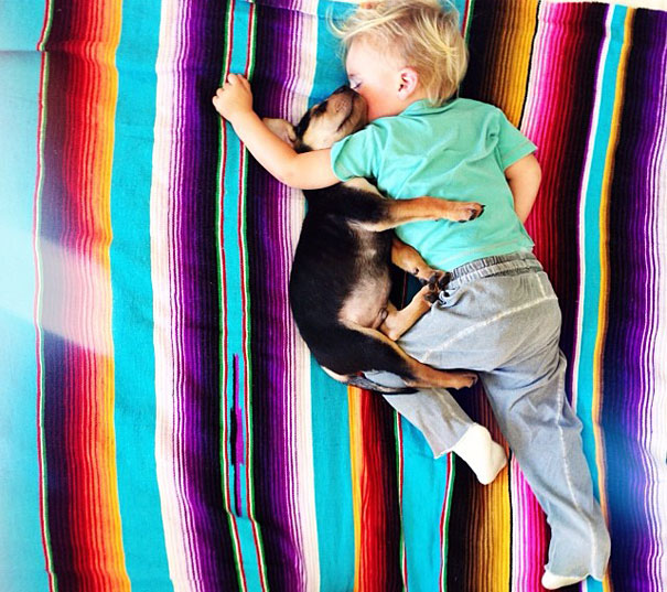 toddler-naps-with-puppy-theo-and-beau-10