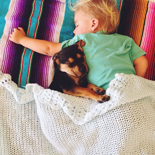 toddler-naps-with-puppy-theo-and-beau-11