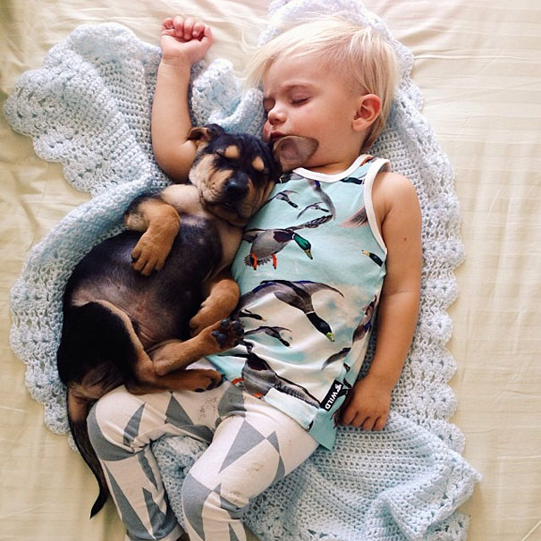 toddler-naps-with-puppy-theo-and-beau-12