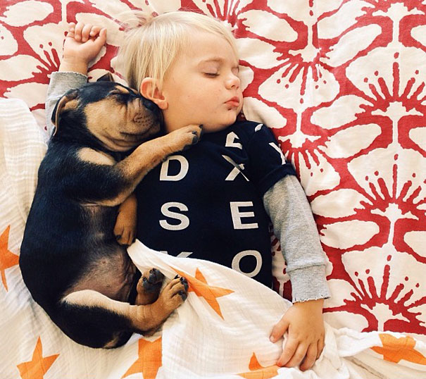 toddler-naps-with-puppy-theo-and-beau-14