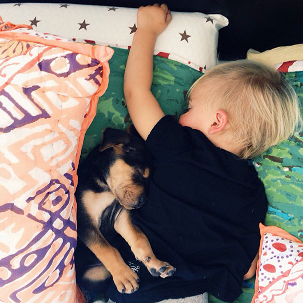 toddler-naps-with-puppy-theo-and-beau-3