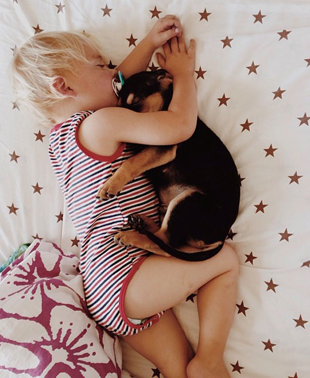 toddler-naps-with-puppy-theo-and-beau-6