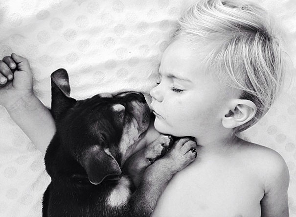 toddler-naps-with-puppy-theo-and-beau-8