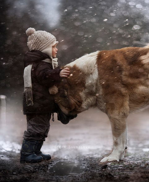 Boy with Animals 3