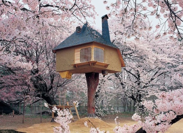 Treehouse in Cherry Blossoms 2