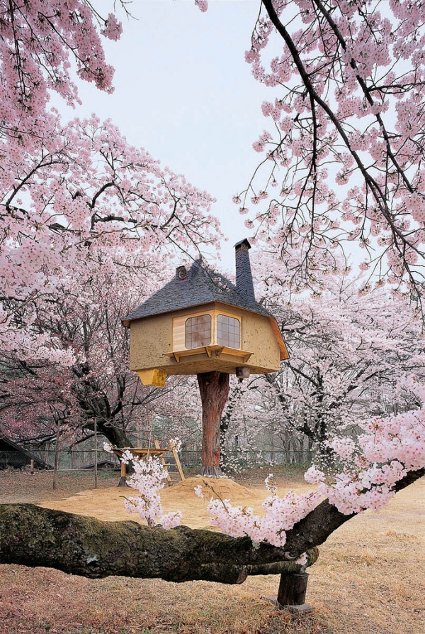 Treehouse in Cherry Blossoms 3