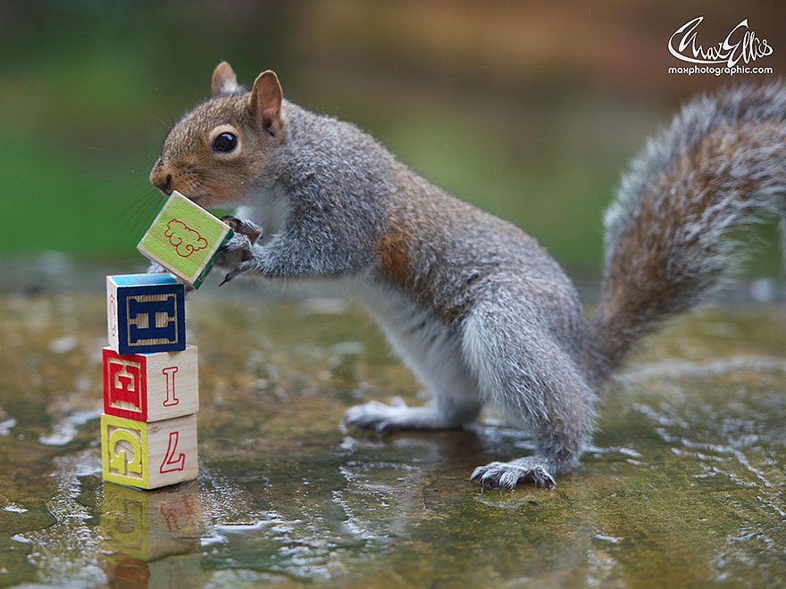 wildlife-photography-squirrels-max-ellis-10