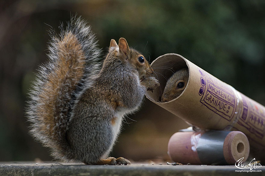 wildlife-photography-squirrels-max-ellis-11