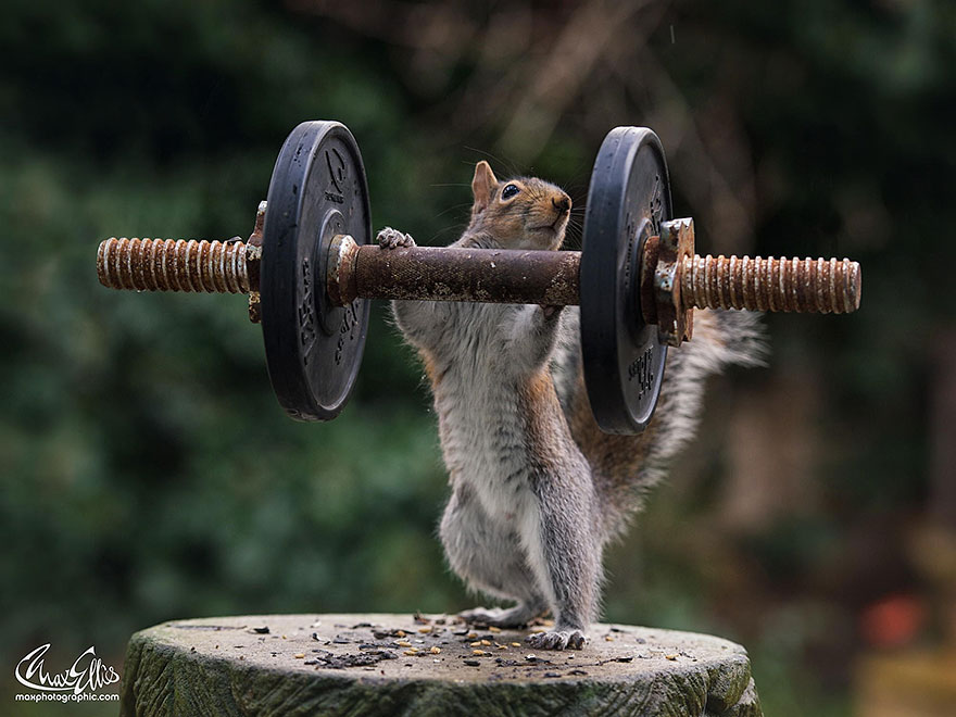wildlife-photography-squirrels-max-ellis-12