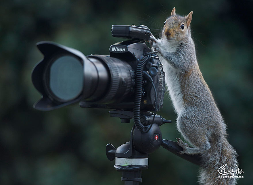 wildlife-photography-squirrels-max-ellis-14