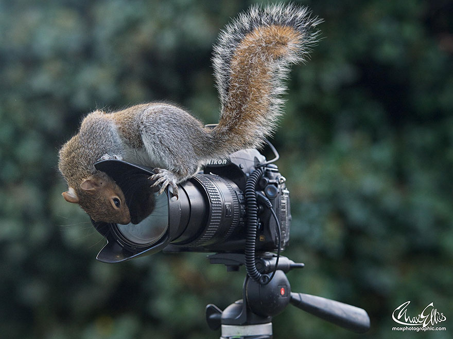 wildlife-photography-squirrels-max-ellis-15