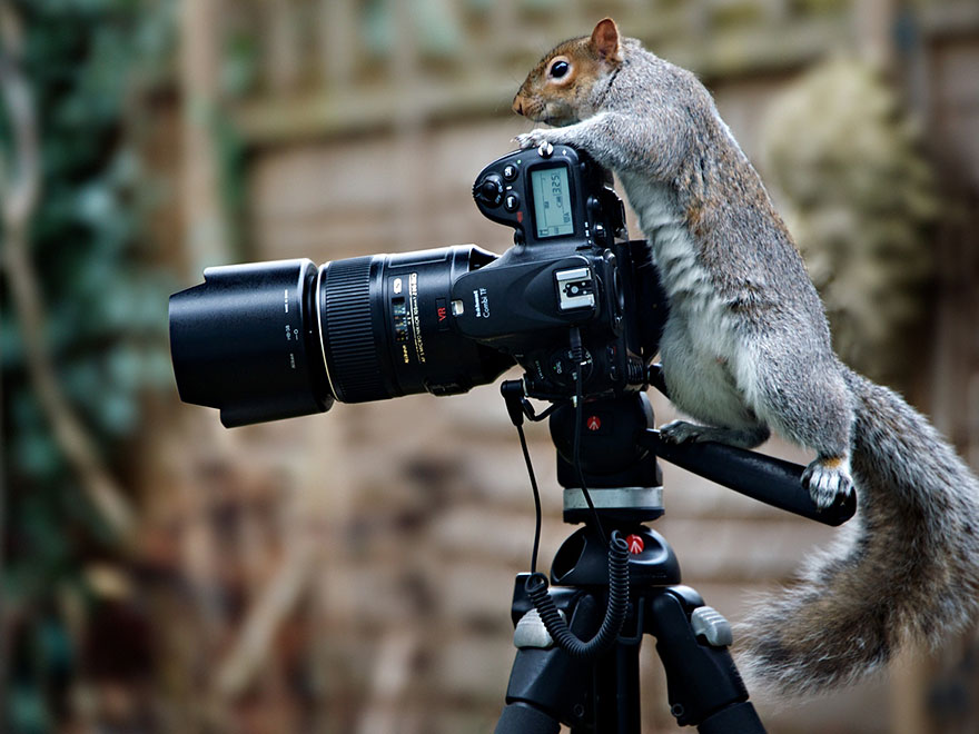 wildlife-photography-squirrels-max-ellis-16