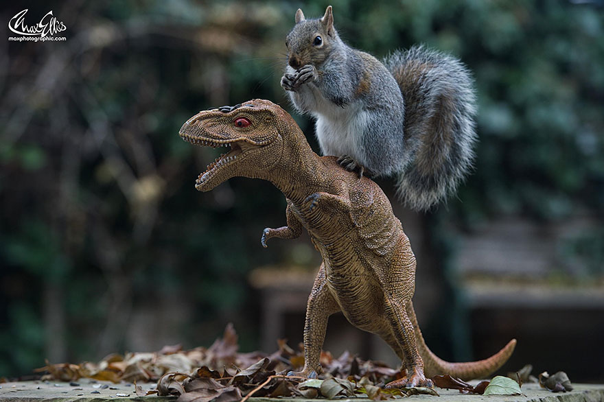 wildlife-photography-squirrels-max-ellis-18