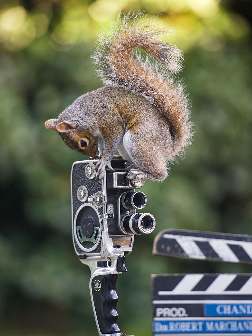 wildlife-photography-squirrels-max-ellis-2