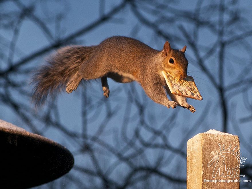 wildlife-photography-squirrels-max-ellis-22