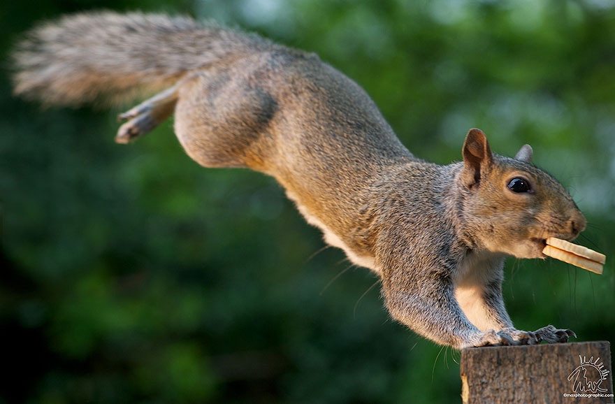 wildlife-photography-squirrels-max-ellis-23