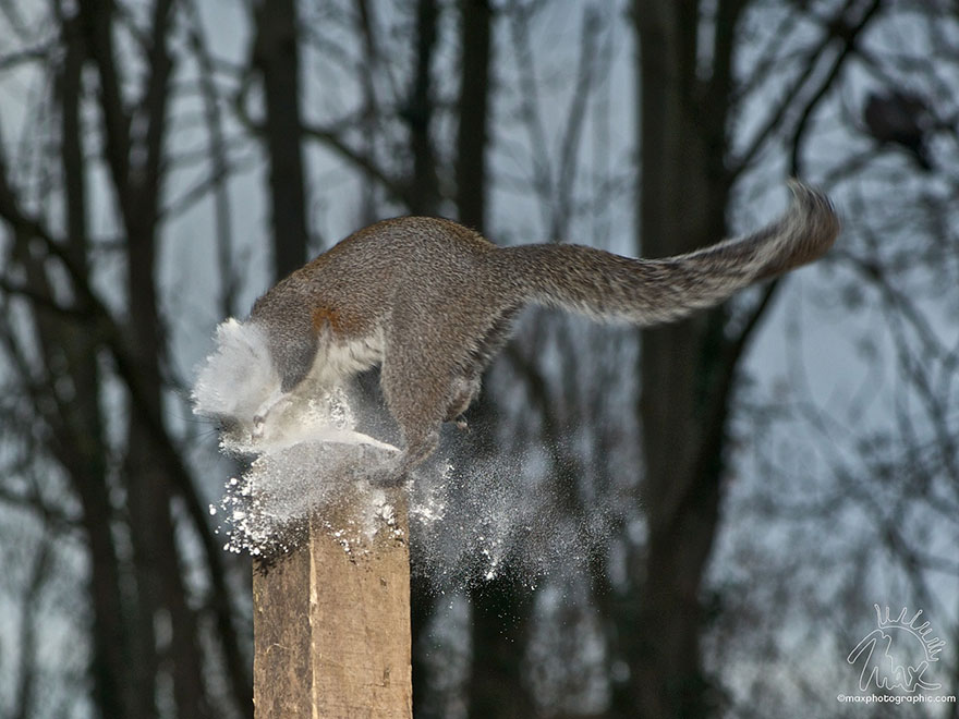 wildlife-photography-squirrels-max-ellis-4