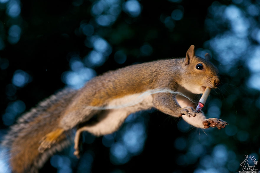 wildlife-photography-squirrels-max-ellis-5