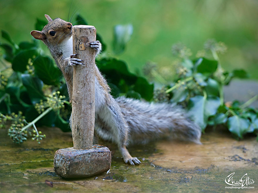 wildlife-photography-squirrels-max-ellis-7