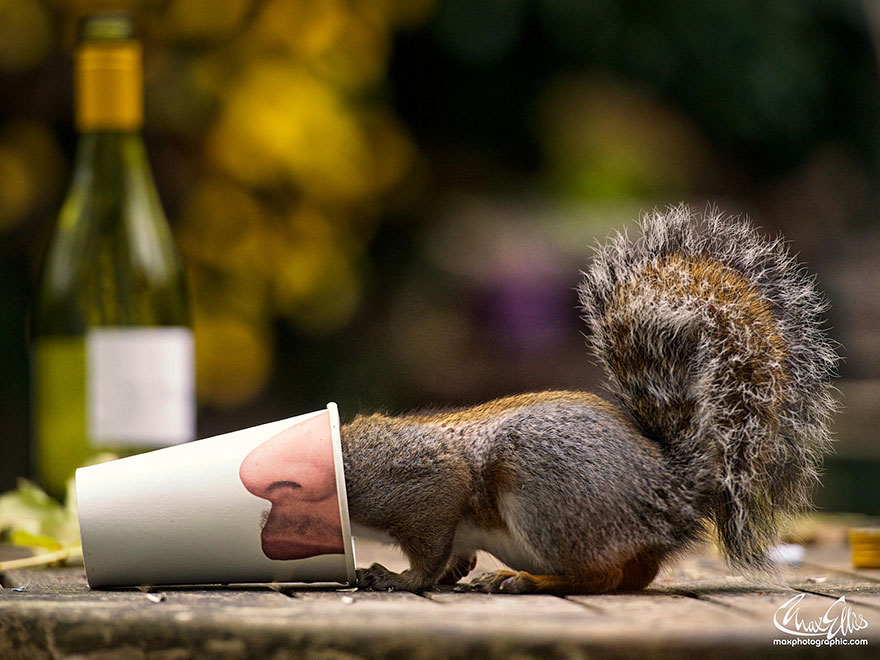 wildlife-photography-squirrels-max-ellis-8