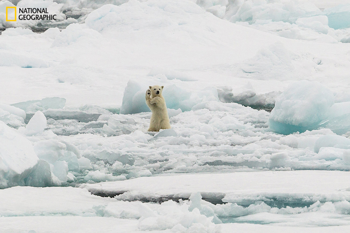 Arctic Hi-Five