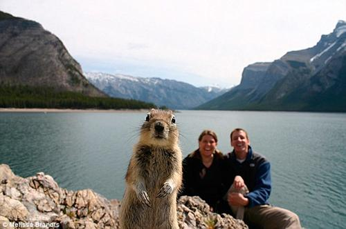 animal-photobomb-1