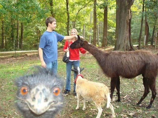 animal-photobomb-10