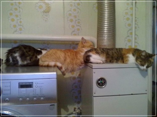 Planking-Pictures-16