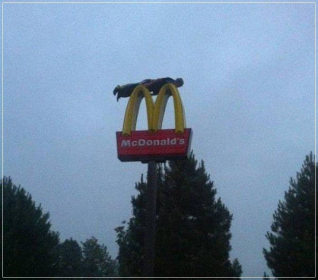 Planking-Pictures-18