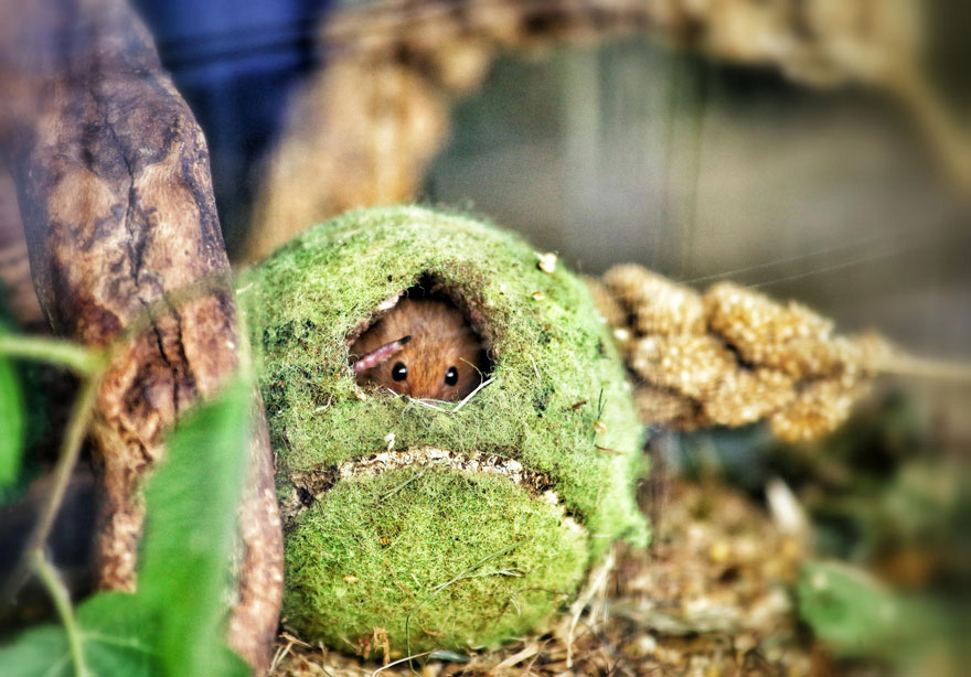 wild-mouse-photography-17