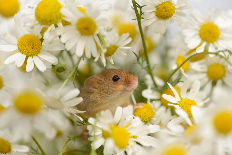 wild-mouse-photography-20