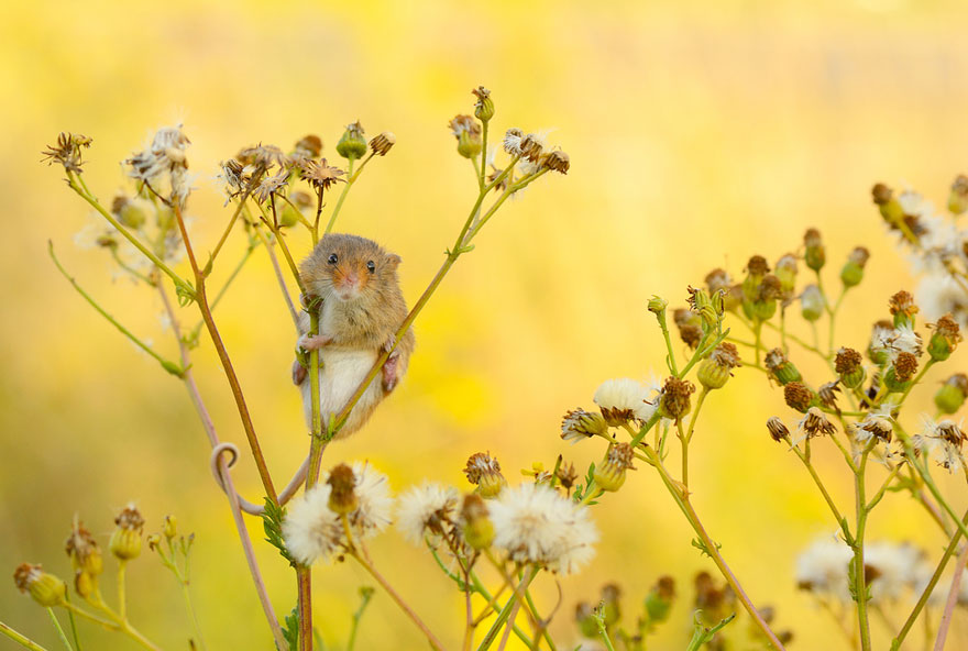 wild-mouse-photography-31