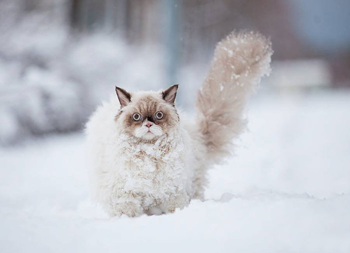cat sees snow 1