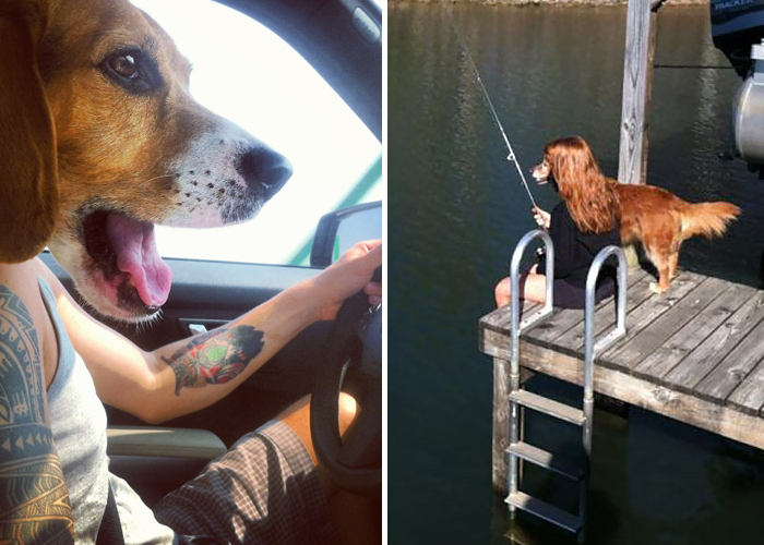 pefectly-timed-dog-photos