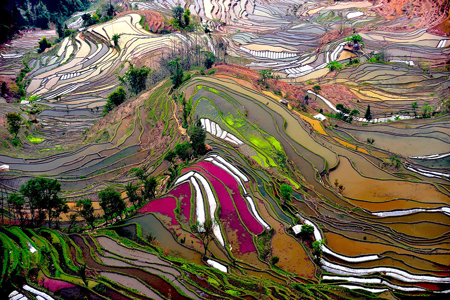 terraced-rice-fields-2
